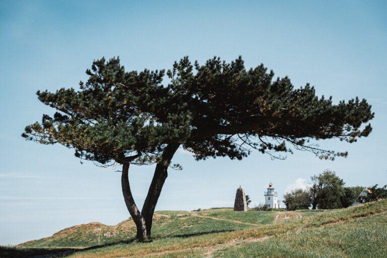 flot sjællandsk natur