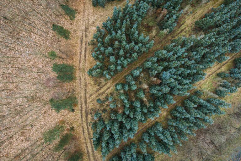 smuk sønderjysk skov