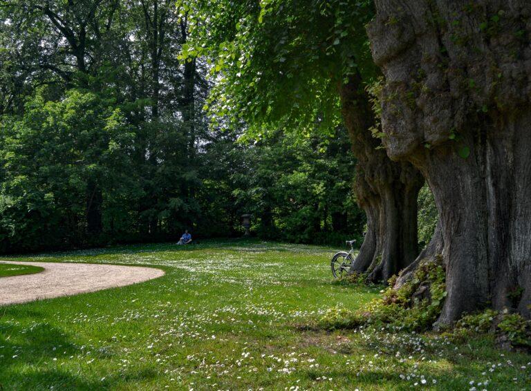 sommer i flot grøn park
